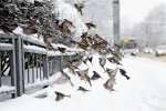 Погода на неделю: украинцев изрядно потреплет и заморозит