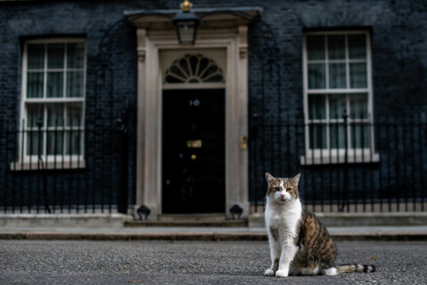 кошка, фото Gettyimages