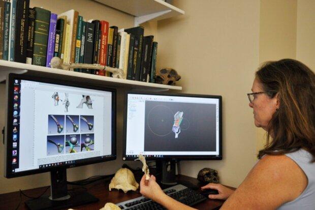 Ученые нашли древнейшего предка человека, вот какими мы были 10 млн лет назад: фото