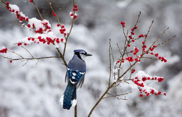 Сегодня народный праздник Сойкин день 11 декабря: поверья и приметы