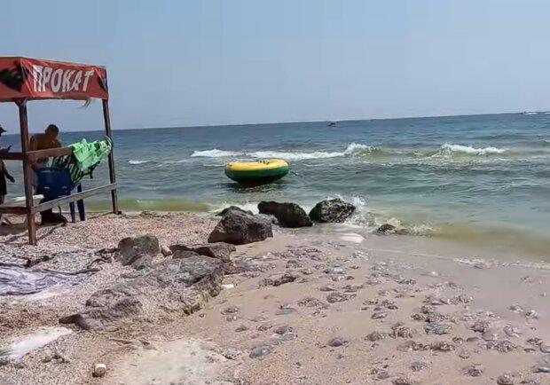 Медузи на березі, кадр з відео