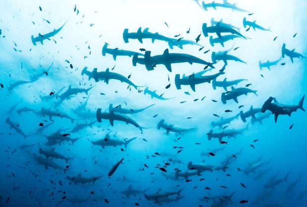 Тримайся подалі від води: біолог опублікував страхітливі кадри з гігантською зграєю морських монстрів