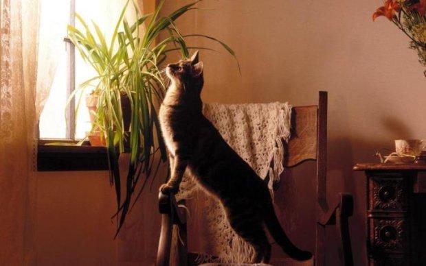 Бездомный кот без век увидел мир. И он ему понравился