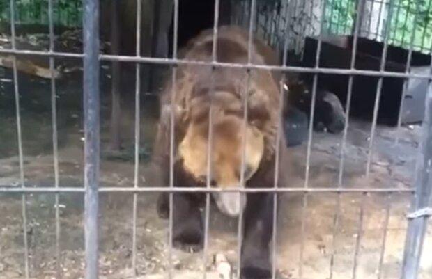 Медведь, кадр из видео: Facebook Ирина Галай
