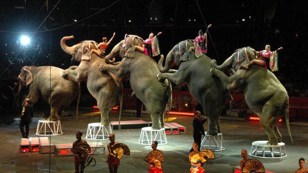 """Днепряне восстали против скандального цирка братьев Гертнер: """"Не позволим издеваться"""""""