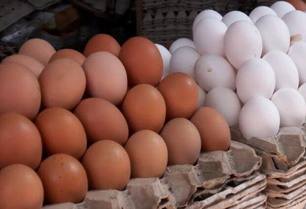 Куриные яйца, фото: кадр из видео
