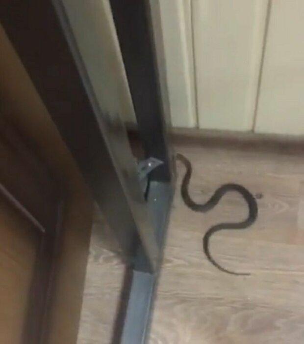 Дніпрянка виявила у власній квартирі небезпечну гадину, - заповзла в висотку