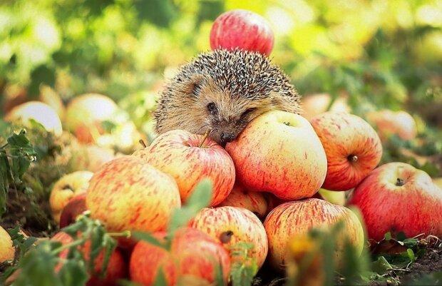 Яблучний Спас 2019: гарні поздоровлення в прозі, віршах та листівках