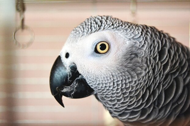 Папуга жако, фото Pxhere