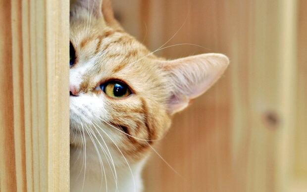 Стоять, это кошачье ограбление: пара пушистых бандитов мастерски опустошили холодильник, видео