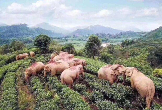 Слоны, фото: facebook.com/Epicalyptic