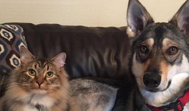 Хаски и котенок из приюта стали звездами Instagram
