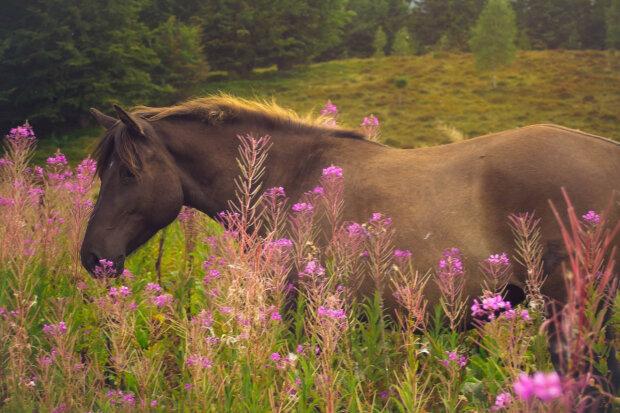 Кінь, фото Depositphotos