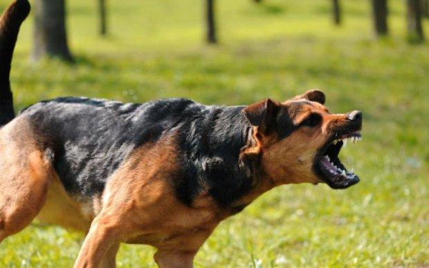 Божевільний господар нацькував собаку на родину, є постраждалі