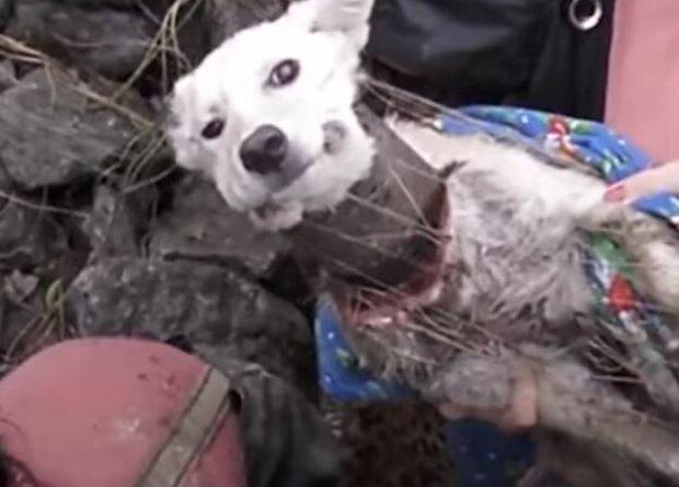 Собака, скріншот: YouTube