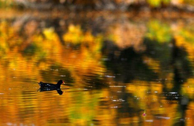 Погода на 10 жовтня: осінь перетвориться на весну