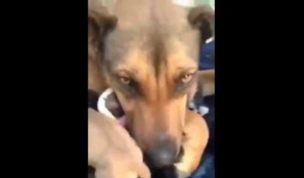 Матері-собаці повернули щенят і вона розплакалася (відео)
