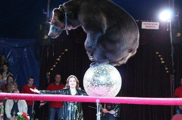 Ведмідь напав на дресирувальницю, скріншот: YouTube