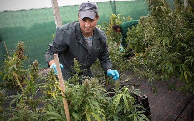 Легалізація легких наркотиків: що думають українці