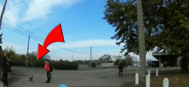 Кішка напала на собаку, фото: скріншот з відео
