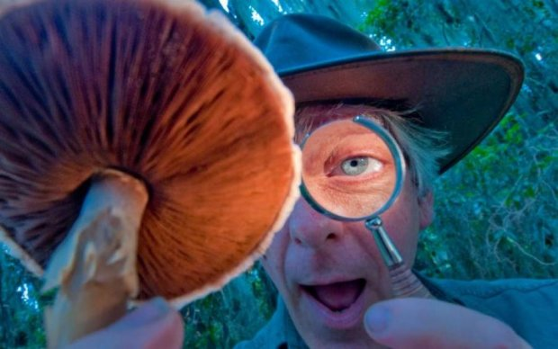 Ученые нашли новое применение галлюциногенным грибам