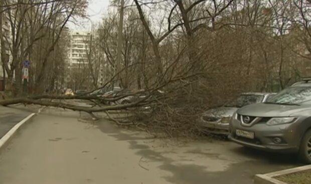 Ураган в Москве, фото YouTube