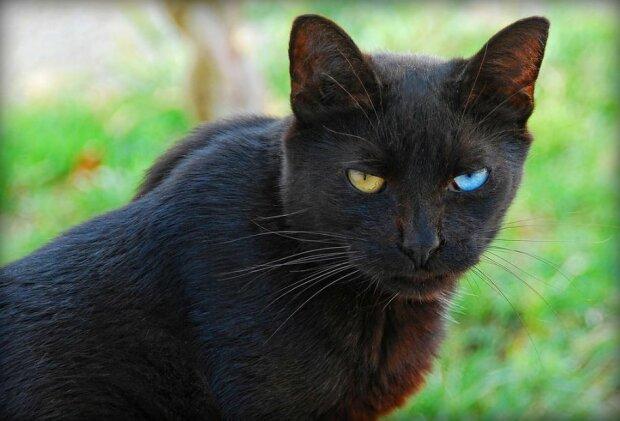 Кіт, фото Flickr