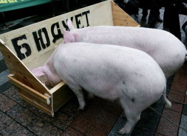 """В Киеве под Раду принесли свинью в гробу, зрелище не для слабонервных: """"На холодец"""""""