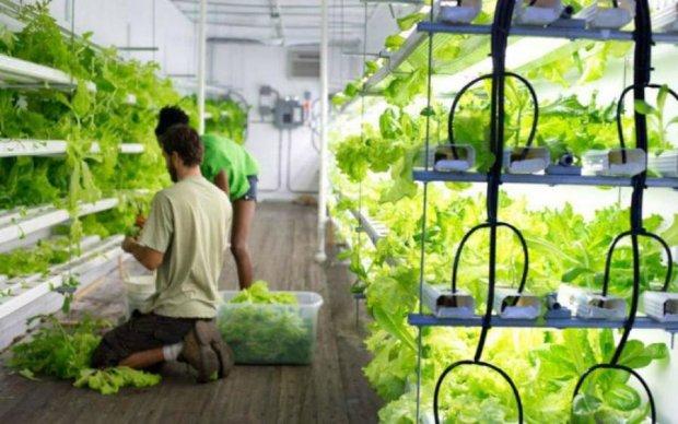 Знайдено спосіб врятувати урожай від стихії