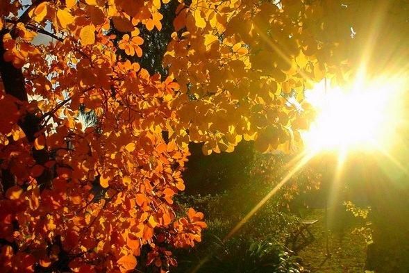 Харьковчане, забудьте об осени: синоптики прогнозируют возвращение лета 13 октября