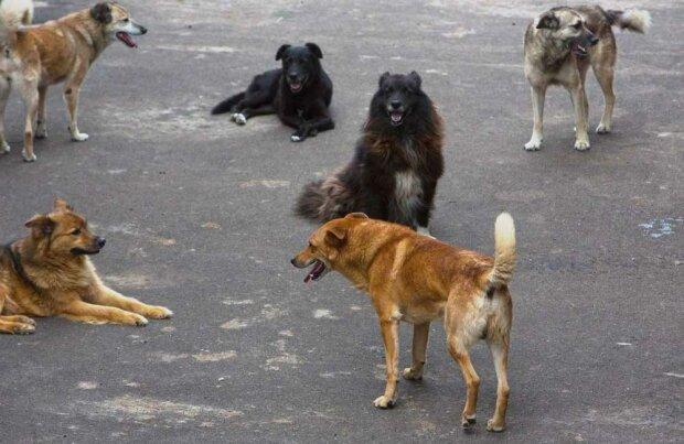 Под Харьковом школьницу покусал бродячий пес, фото: Огород Х