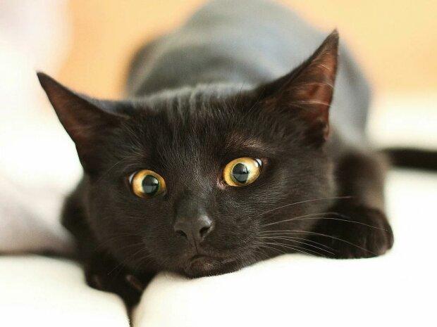 Найкращі анекдоти на п'ятницю 13 грудня: з такими жартами й чорна кішка не страшна
