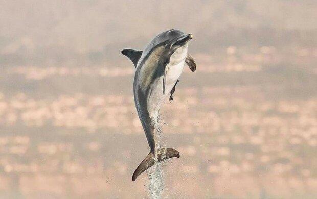 дельфин, автор фото: Delaney Trowbridge
