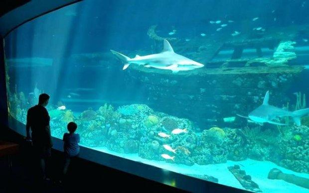 Шалені злодії вивезли рідкісну акулу в дитячому візочку: епічне відео