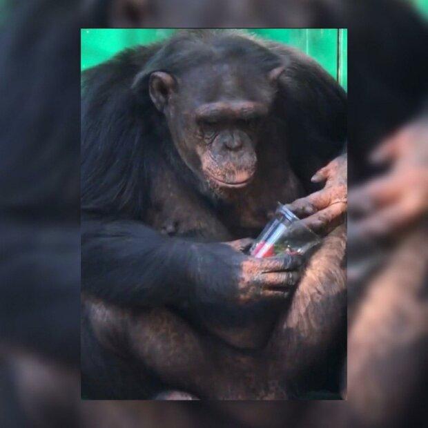 Розумний примат в Бердянську захопив українців - поводиться як людина