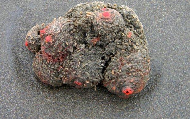 Біля морського узбережжя знайшли інопланетну істоту