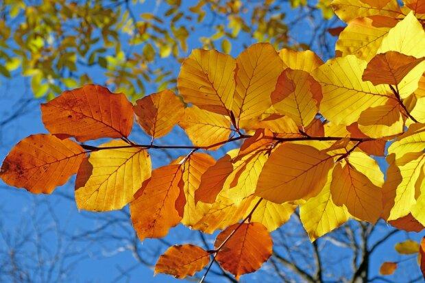 Погода 30 октября: запорожцы простятся с осенью на теплой ноте