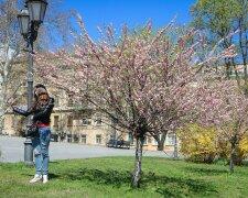 Сакура в Одесі, фото: Odessa.online