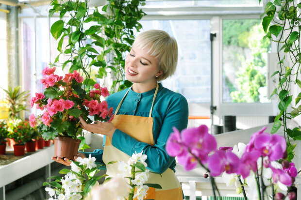 Оздоровление, не вставая с дивана: какие тайны скрывают домашние растения