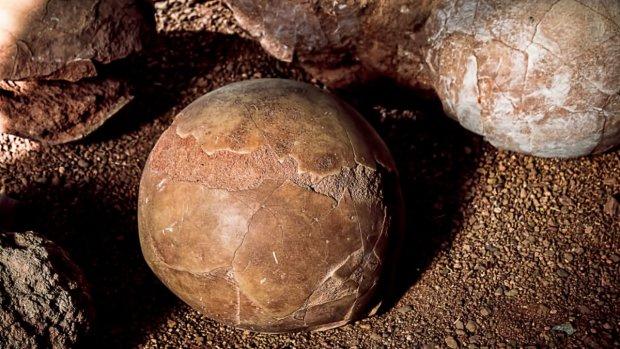 Игра престолов по-китайски: 10-летний мальчик откопал 11 яиц динозавров