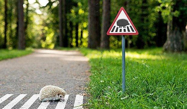 У Вільнюсі нагадали про тварин крихітними дорожними знаками (фото)