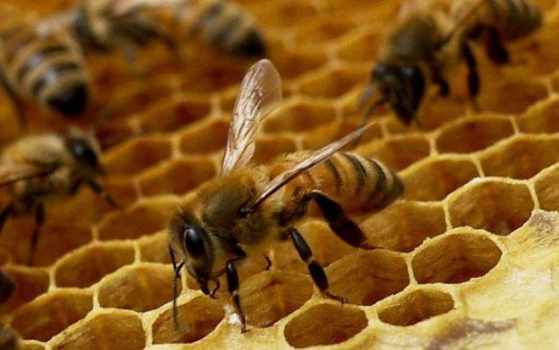 Знайдено ключ до загадки вирощування королеви бджіл