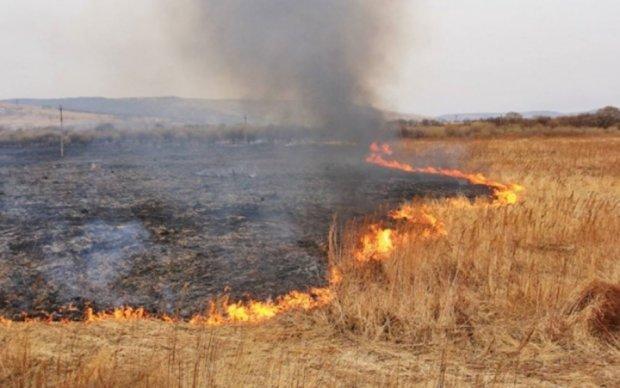 Підпали трави ведуть до моторошних наслідків: фото