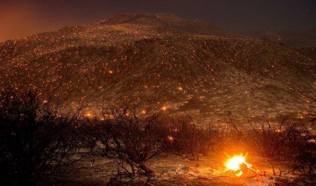 Фото дня: лісова пожежа як витвір мистецтва