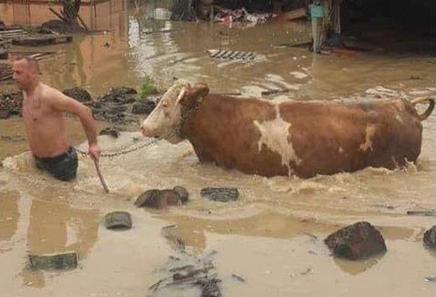 Прикарпаття змиває - у воді плавають люди і корови, всі в жаху