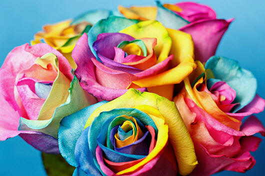 Троянди - фото kartynky.co.ua
