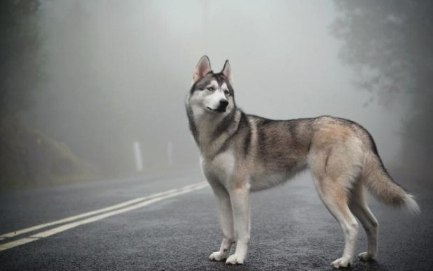 Тащил собаку за авто: украинцы разыскивают водителя-живодера