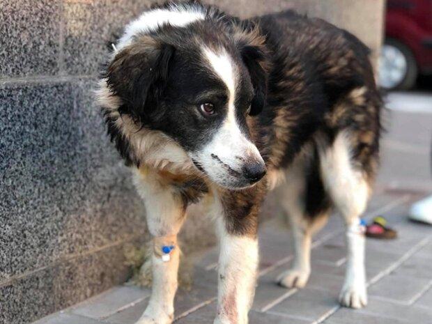 Целились в пах: днепряне устроили самосуд над живодером, расстреливавшим котов и собак