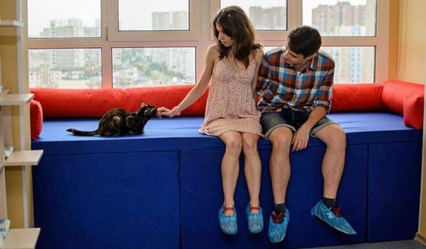 В Києві  відкрилося кафе, де можна грати з котами (фото)