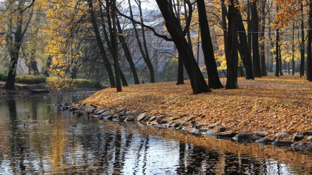 """До Києва прийшов """"несолодкий листопад"""": яку погоду обіцяють синоптики"""